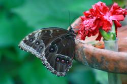 Motýlí dům