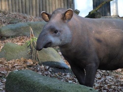 zoo_decin_