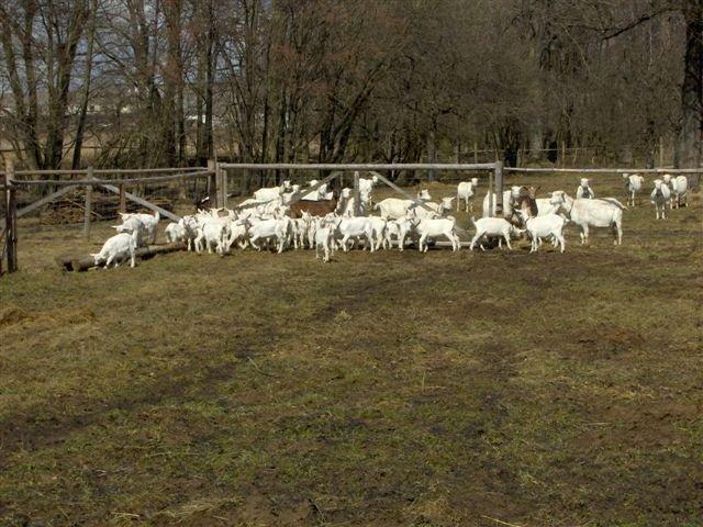 Kozí farma Žofín.JPG