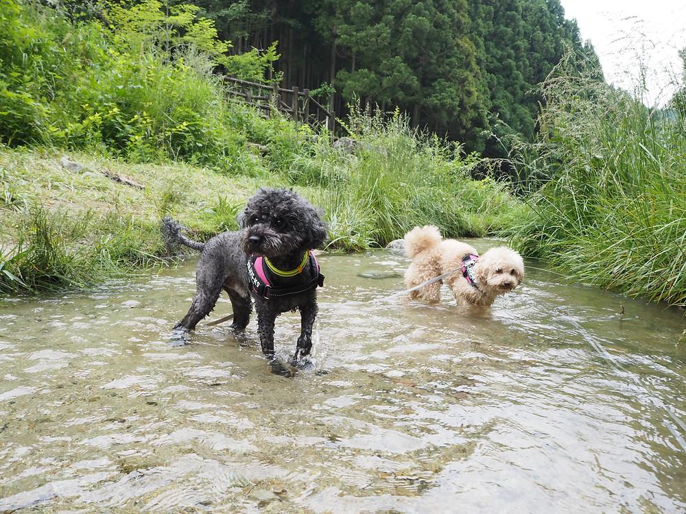 川遊びを楽しむふたり