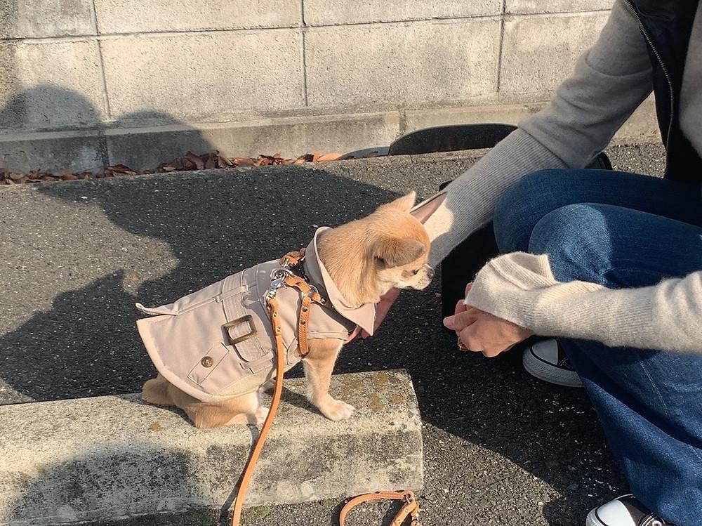 BETHちゃんお散歩トレーニング