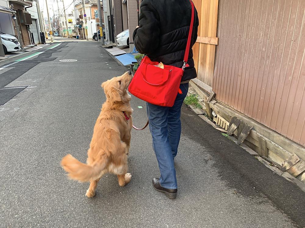 ココちゃんお散歩レッスン