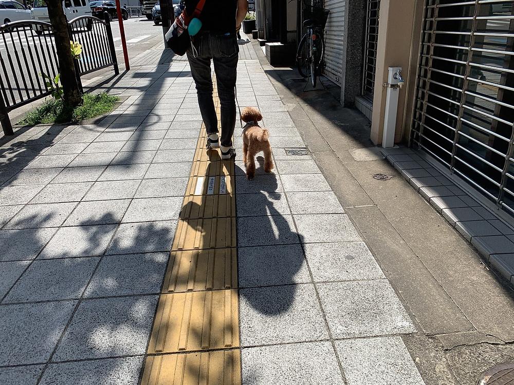 ウィルくんお散歩トレーニング