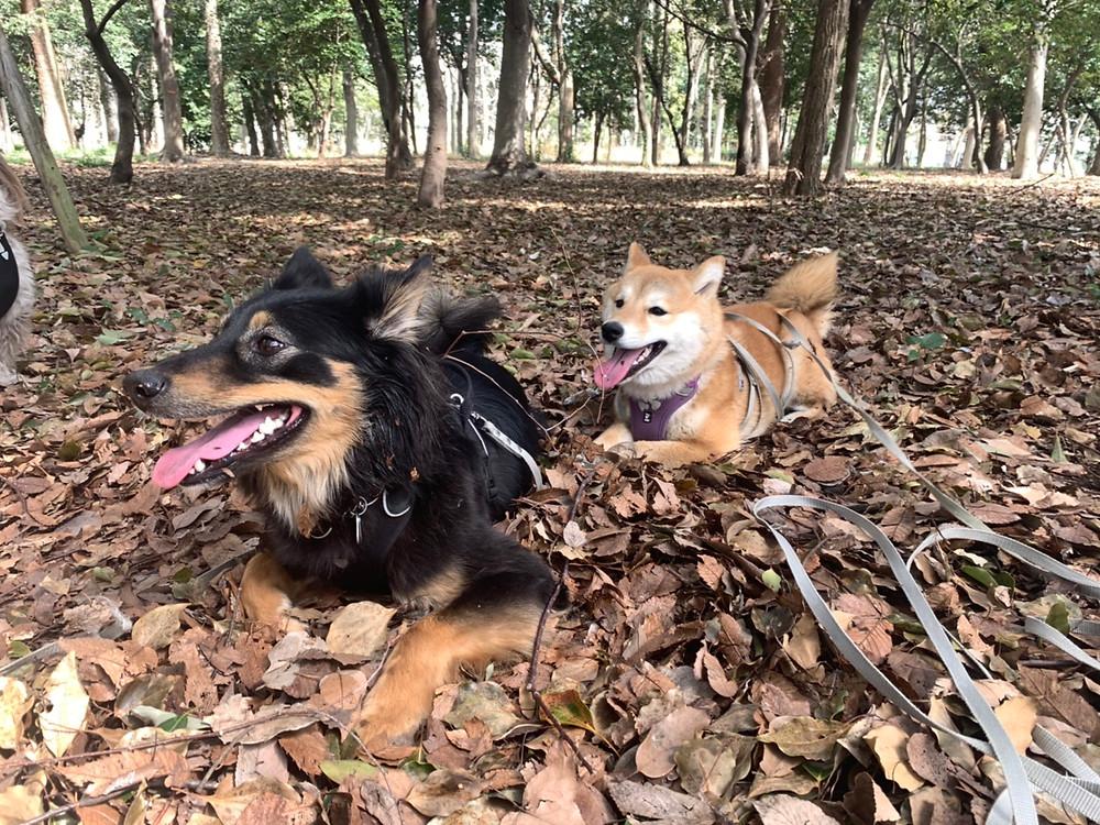 楓ちゃん大阪城公園で遊ぶ