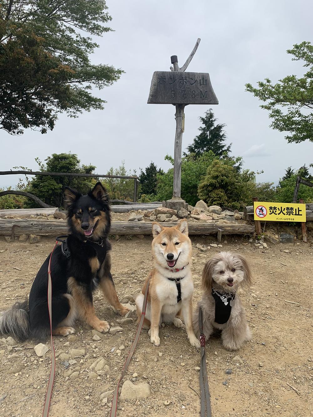 楓ちゃんポンポン山の頂上に到着