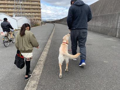 むぎちゃん【大阪 犬のしつけ】