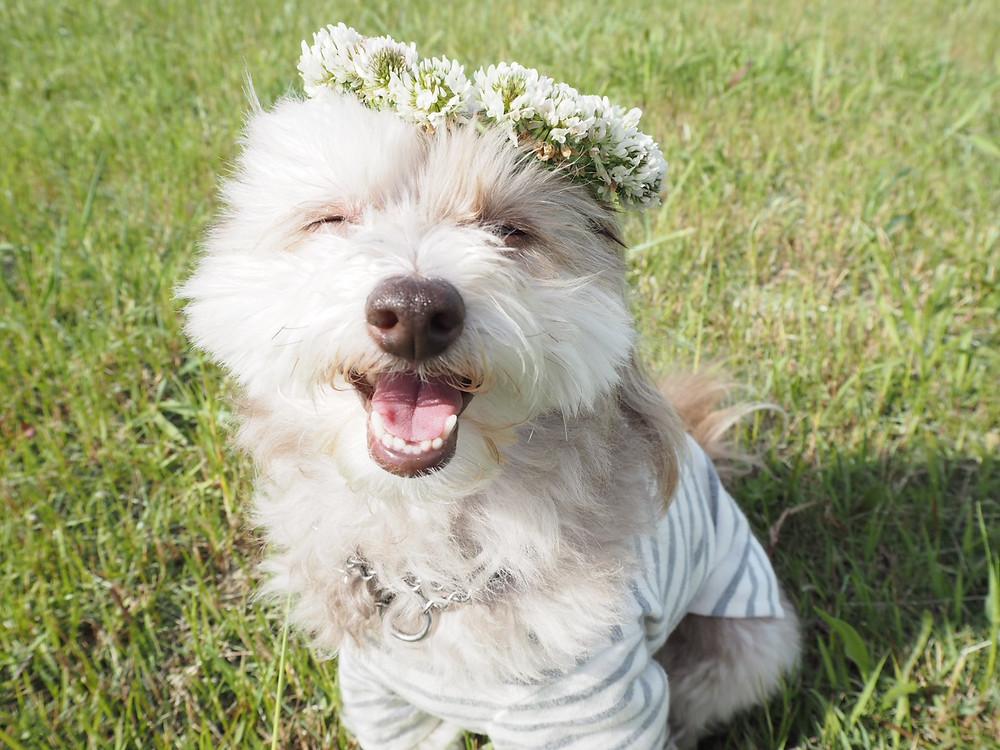 ドッグトレーナーの愛犬