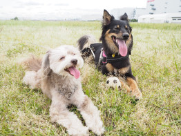 dog voiceのトレーニングの方向性
