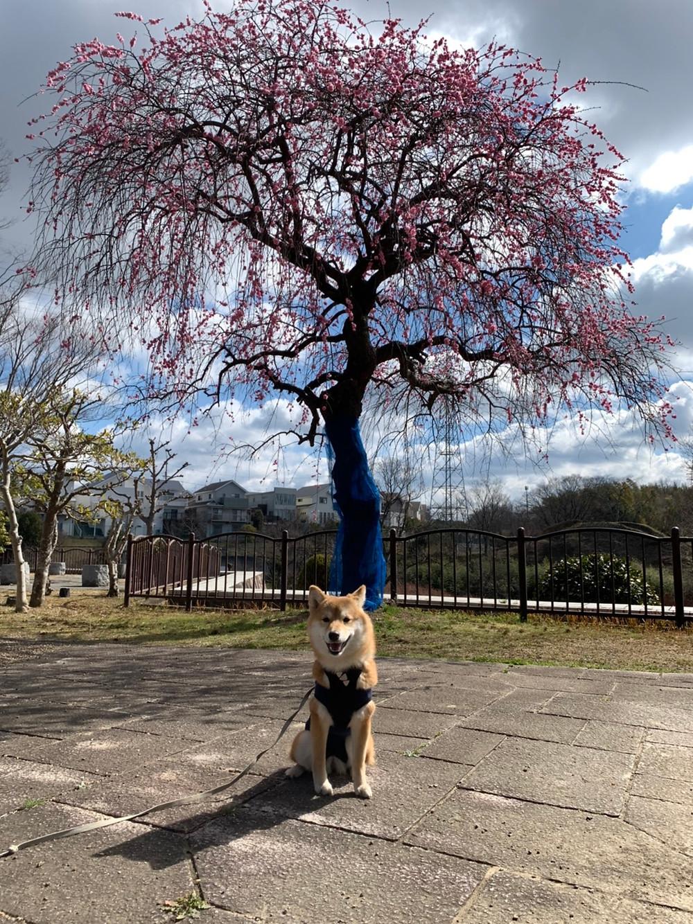 楓ちゃん記念写真