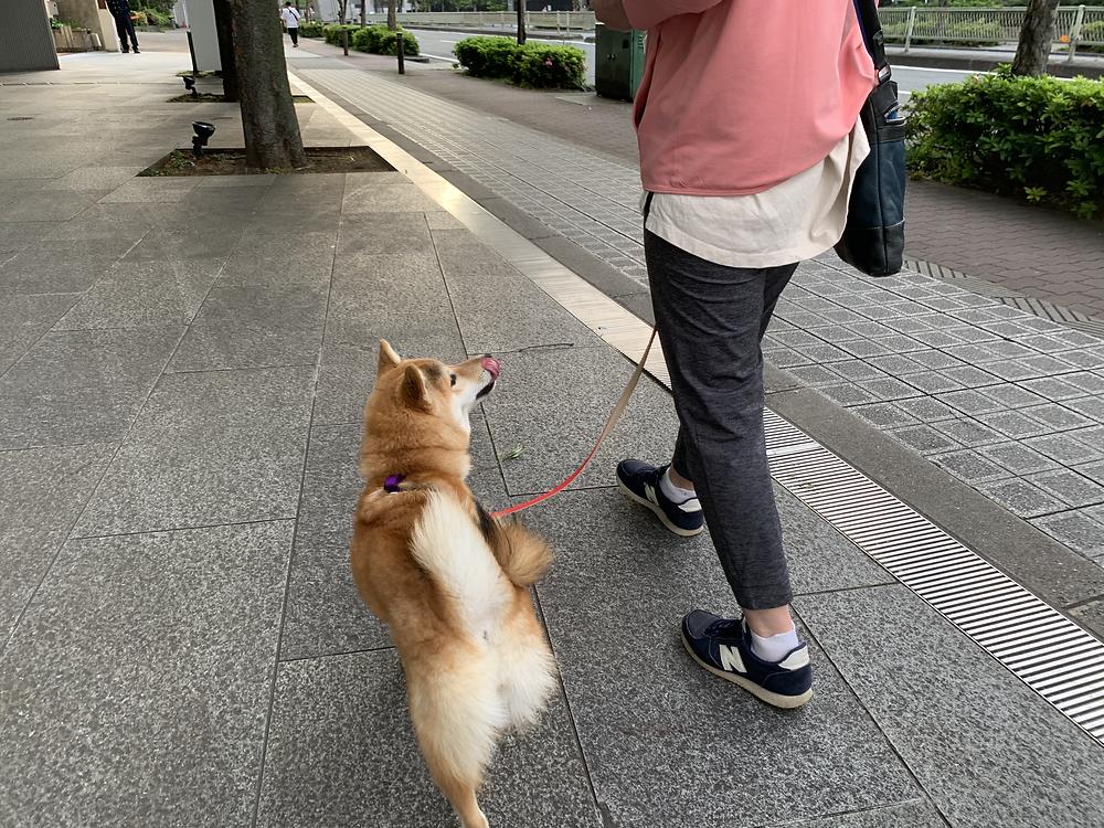 楓ちゃんお散歩レッスン