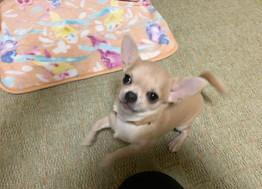 BETHちゃん【大阪 犬のしつけ】