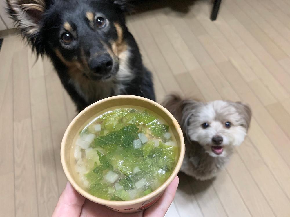 犬の食事療法セミナーでの犬の手作りごはん