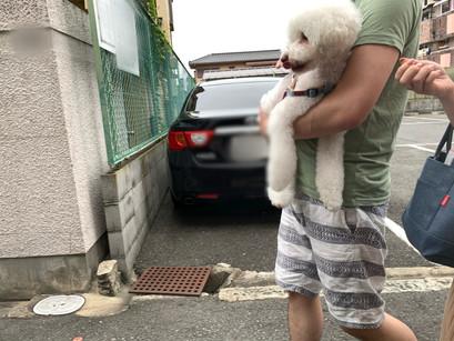コテツくん、てん助くん【大阪 犬のしつけ】