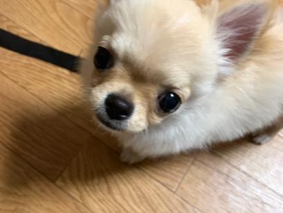 ポンタくん【大阪 犬のしつけ】