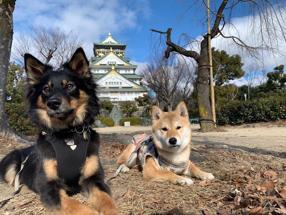 楓ちゃん大阪城の前で記念写真