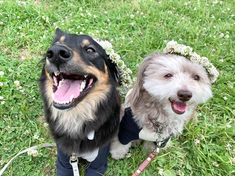 ドッグトレーナーと愛犬たち