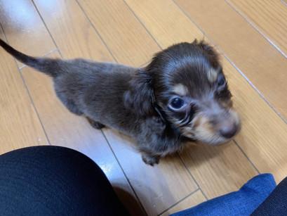 ちゃびくん【大阪 犬のしつけ】