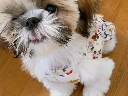 かりんちゃん【大阪 犬のしつけ】