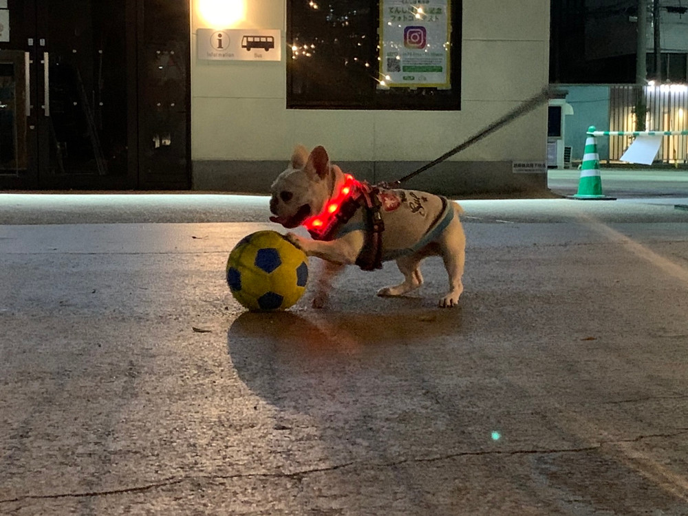 CoCoちゃんサッカー遊び