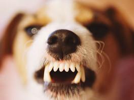 為何我的狗會凶惡?