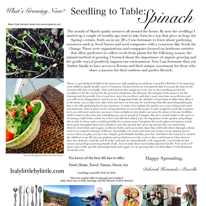 What's Growing Now? Seedling to Table Spinach