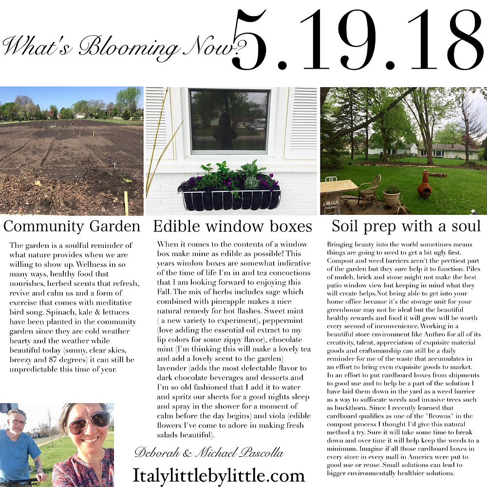 Community Gardens, Edible Window Boxes & Soil with a Soul