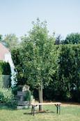 Garten mit Kräuterecke