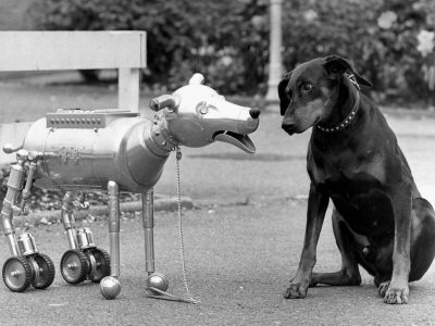 Are Dogs Machines?