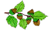 branche noisette.png