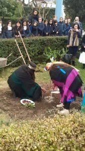 Plantando un árbol del canelo, nuestro colegio celebró el We Tripantu