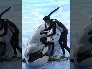 SeaWorld's orca passes away