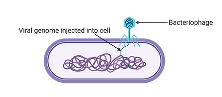 Transduction (1).png