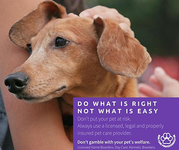 Licensed pet care provider Jul 20.jpg