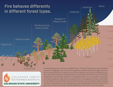 Forest Health picture.jpg