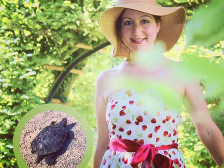 Die Rotwangenschildkröte - mein erster Erfahrungsbericht