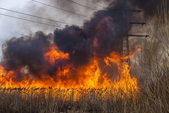 A spring fire. Burning grass..jpg