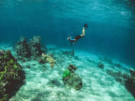 Diving into the Deep Blue Ocean: Strategy Building for Social, Cultural & Creative Organisations