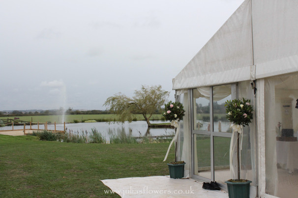 Bay Trees outside Marquee.JPG