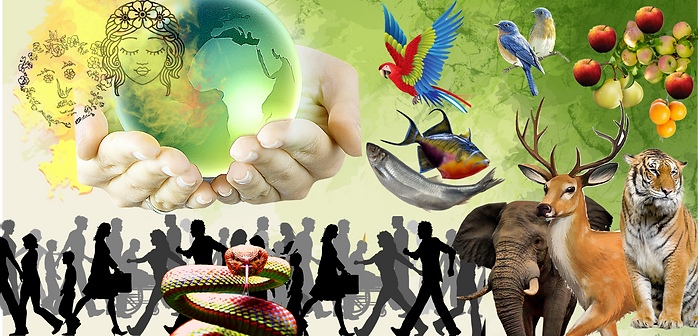 WORLD CREATION COLLAGE canva pngtree png