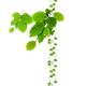 LEAVES 3 good one.png