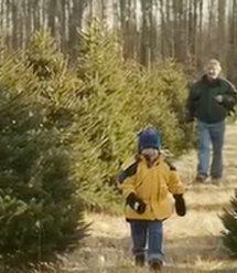 Start a New Christmas Tradition, Cut Your Own Tree This Year