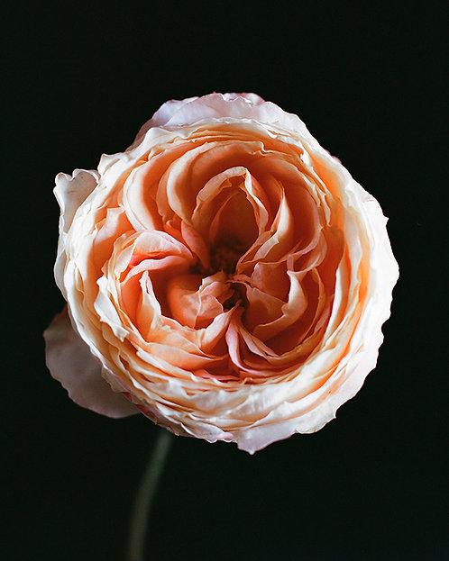 June Peach