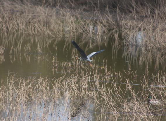 Vacances natures, idéales pour observer les oiseaux de Loire en Anjou