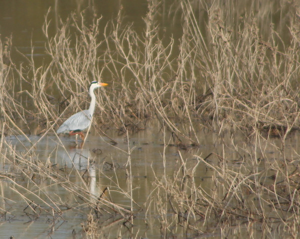 Observation des oiseaux de Loire à deux pas du gîte Murmures de Loire