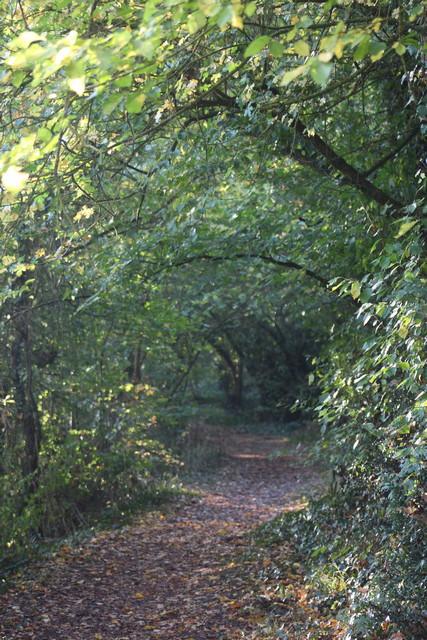 Location en bord de Loire : randonnée nature au départ du gîte