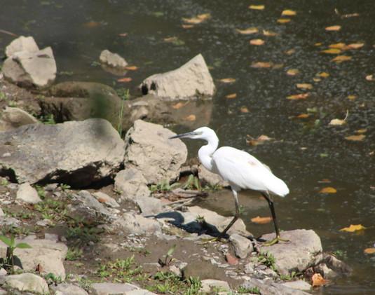 Des vacances en pleine nature pour se détendre et observer les oiseaux de Loire