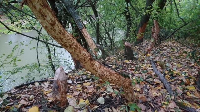 Location idéale pour observer en toute tranquillité la faune des bords de Loire
