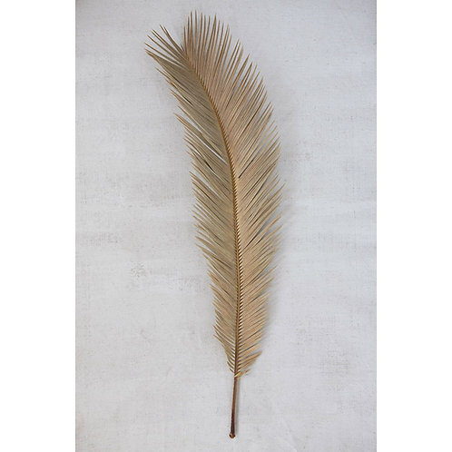 Dried Palm Leaf