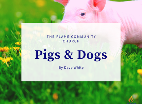PIGS & DOGS
