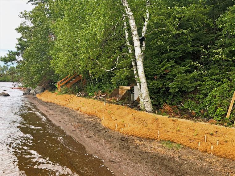 Shoreline Erosion Control Planting